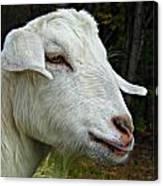 Milkshakes The Goat Canvas Print