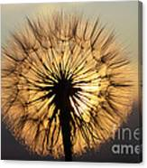 Beauty Of The Dandelion 2 Canvas Print