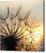 Milkweed 2 Canvas Print