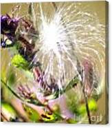 Milkweed Cotton  Canvas Print
