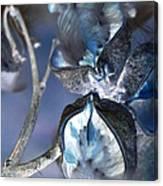 Milkweed In Blue Canvas Print