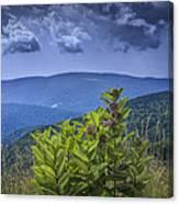 Milkweed Plants Along The Blue Ridge Parkway Canvas Print