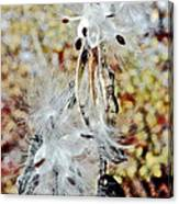 Milkweed Pod On Hart-montague Trail In Northern Michigan Canvas Print