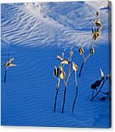 Milkweeds In The Snow Canvas Print