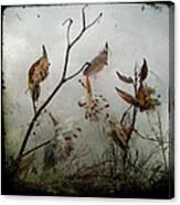 Milky Milkweed Canvas Print
