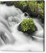 Milky Stream Canvas Print