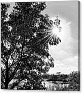 Mill Creek Marsh Afternoon Sun Canvas Print
