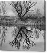 Mill Pond Tree Canvas Print
