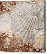 Million Years Ago 1 Canvas Print