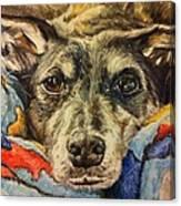 Milo The Lurcher Canvas Print