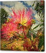 Mimosa Blossoms Canvas Print