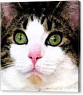 Mina's Green Eyes Canvas Print
