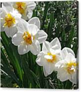 Miner's Wife Daffodils Canvas Print