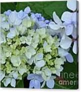 Mini Blue Hydrangea Canvas Print