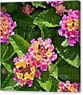 Mini Flowers Canvas Print