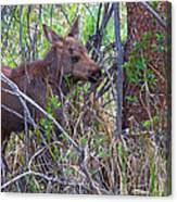Mini Moose Canvas Print