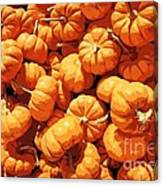 Mini Pumpkins Canvas Print