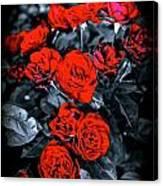 Mini Roses On Walk Canvas Print