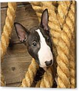 Miniature Bull Terrier Puppy Canvas Print
