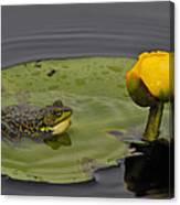 Mink Frog On Lilypad  Canvas Print
