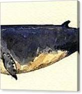 Minke Whale Canvas Print