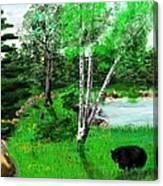 Minnesota Birch Lake And Bear Canvas Print