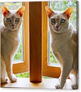 Mirrored Cats Canvas Print