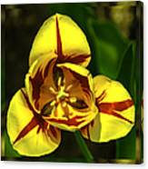 Mirrored Tulip Time Canvas Print