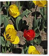 Misplaced Tulip   #0934 Canvas Print