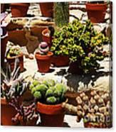 Mission Cactus Garden Canvas Print
