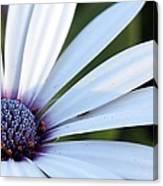 Mission Flower 4480 Canvas Print