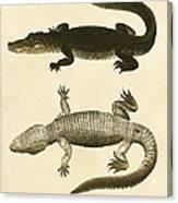 Mississippi Alligator Canvas Print