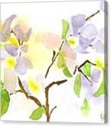 Missouri Dogwood In Watercolor Canvas Print