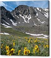 Missouri Mountain And Wildflower Landscape Canvas Print