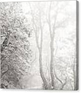 Mist In Madeira Canvas Print