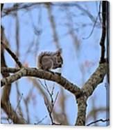 Mister Squirrel Canvas Print