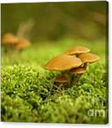 Mistery Mushrooms Canvas Print