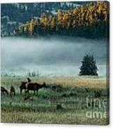 Misty Breakfast Canvas Print