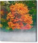 Misty Fall Tree Canvas Print