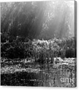 Misty Marsh - Black And White Canvas Print