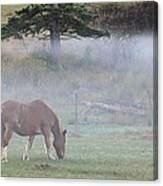 Misty Meadow Canvas Print