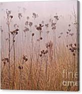 Misty Meadow Canvas Print