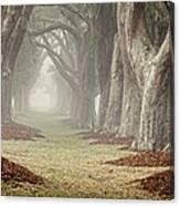 Misty Morning Avenue Of Oaks Canvas Print
