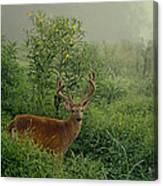 Misty Morning Deer Canvas Print