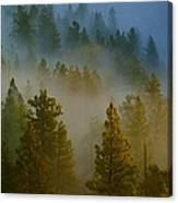 Misty Morning In The Pines Canvas Print