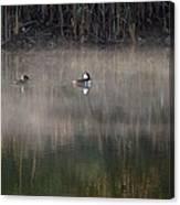 Misty Morning Mergansers Canvas Print