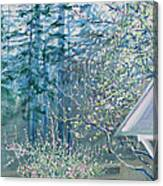 Misty Morning With Apple Blossoms And Redwoods Canvas Print