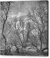 Misty Trees Tryptic Canvas Print