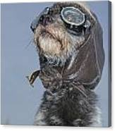 Mixed Breed Dog Dressed In Leather Cap Canvas Print