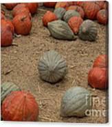 Mixed Pumpkins Canvas Print